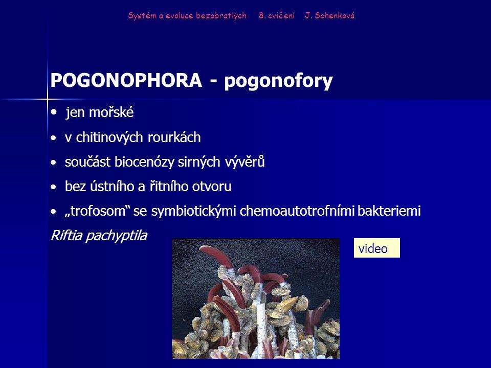 POGONOPHORA - pogonofory