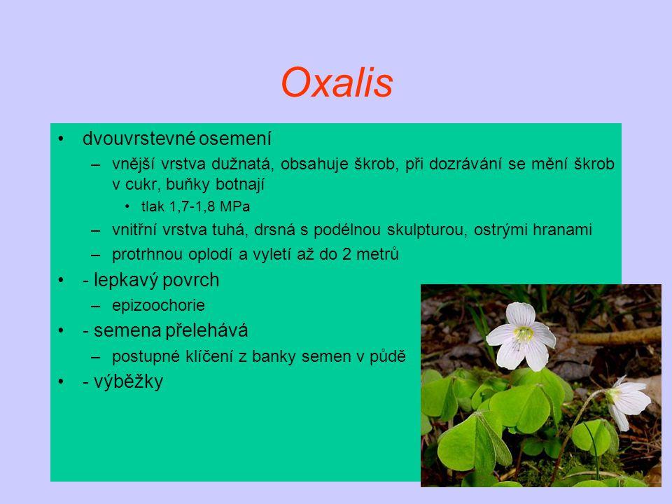 Oxalis dvouvrstevné osemení - lepkavý povrch - semena přelehává