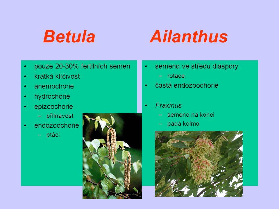 Betula Ailanthus pouze 20-30% fertilních semen krátká klíčivost