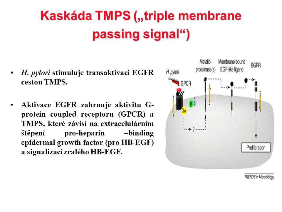 "Kaskáda TMPS (""triple membrane passing signal )"