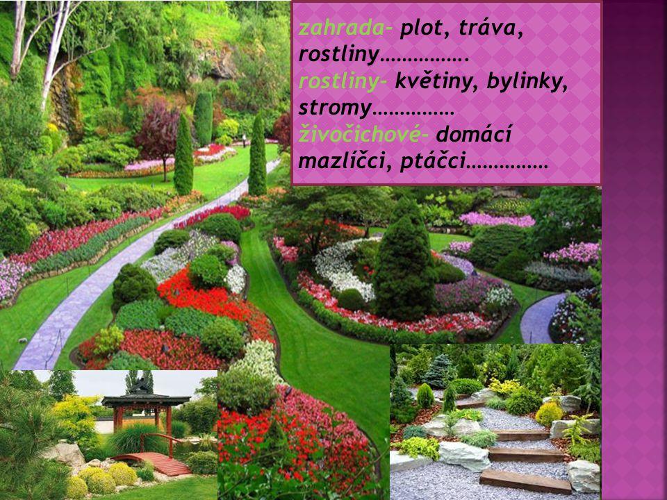zahrada- plot, tráva, rostliny…………….