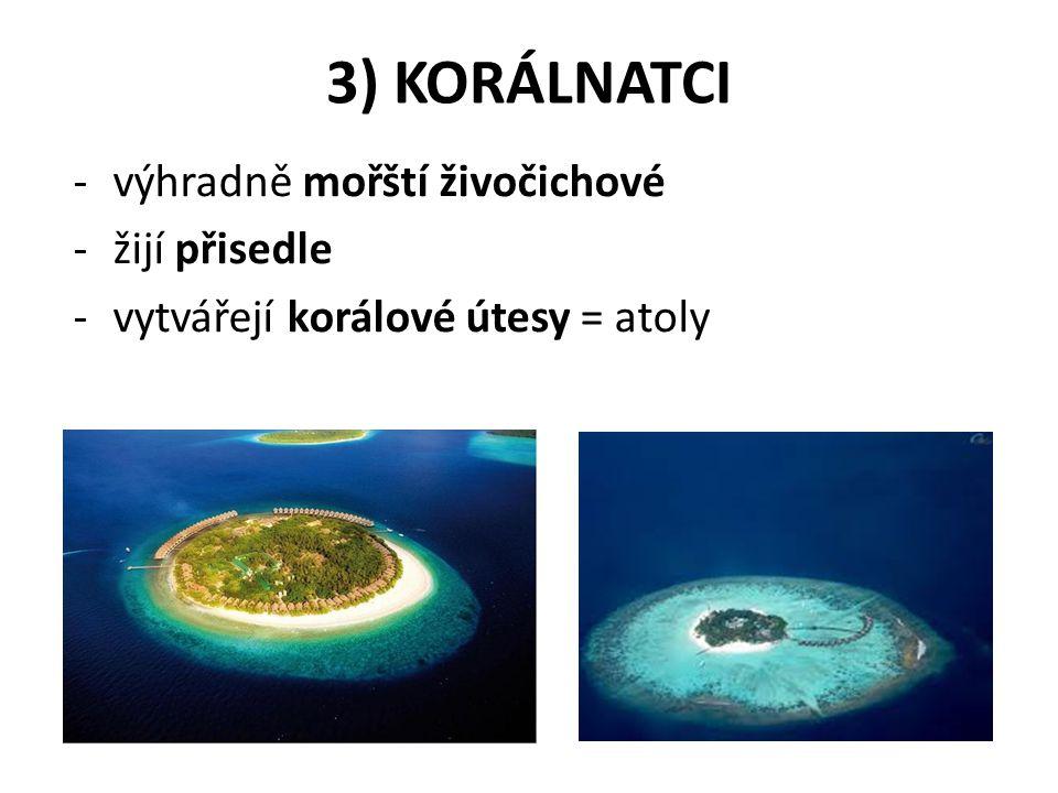 3) KORÁLNATCI výhradně mořští živočichové žijí přisedle
