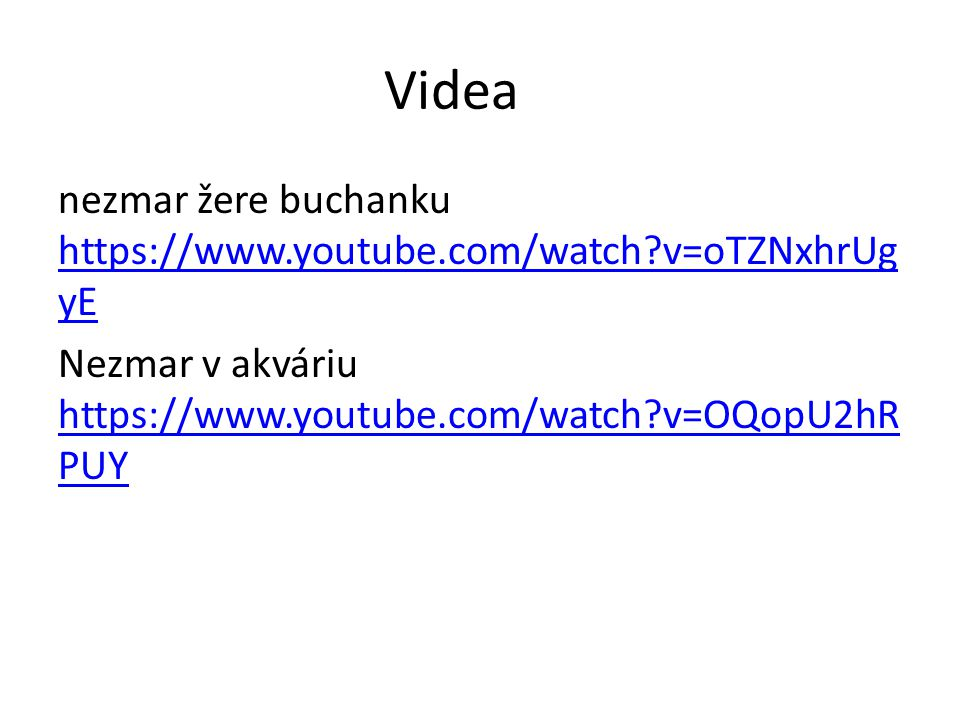 Videa nezmar žere buchanku https://www.youtube.com/watch v=oTZNxhrUgyE Nezmar v akváriu https://www.youtube.com/watch v=OQopU2hRPUY