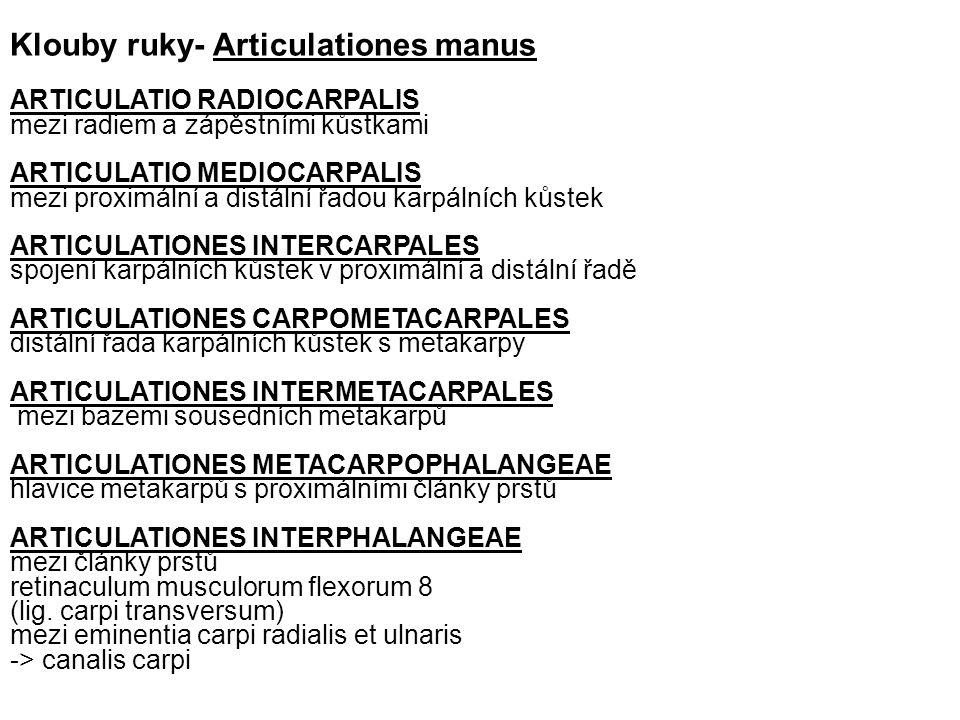 Klouby ruky- Articulationes manus
