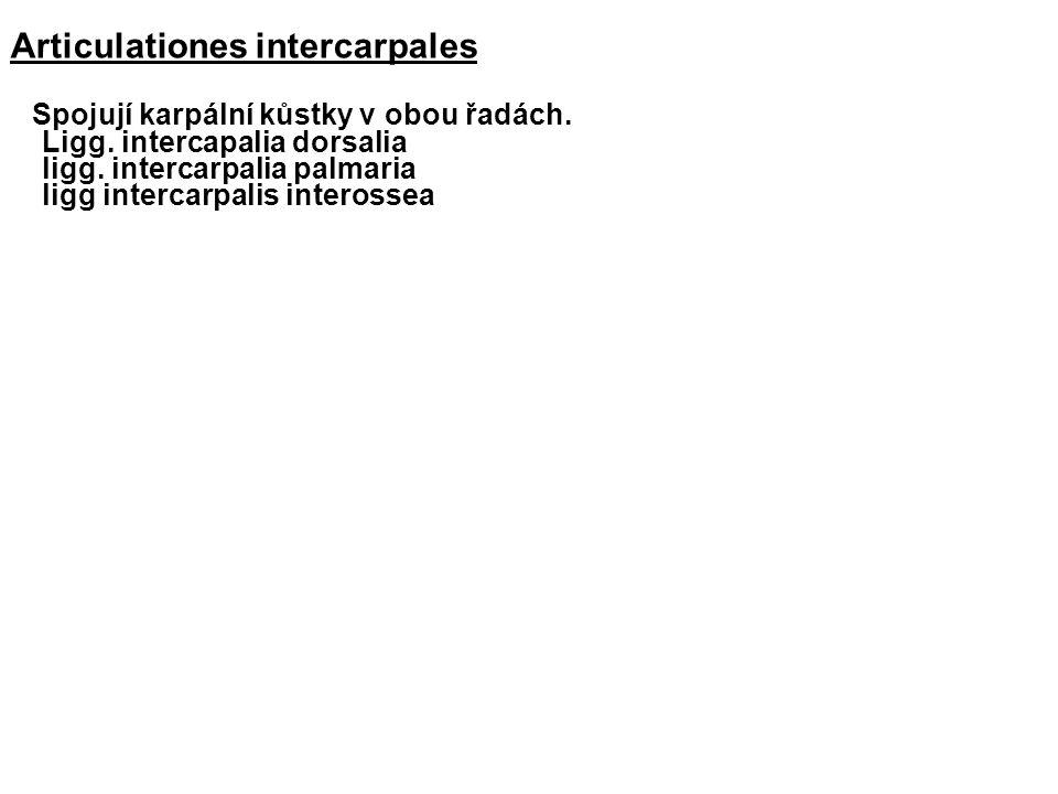 Articulationes intercarpales