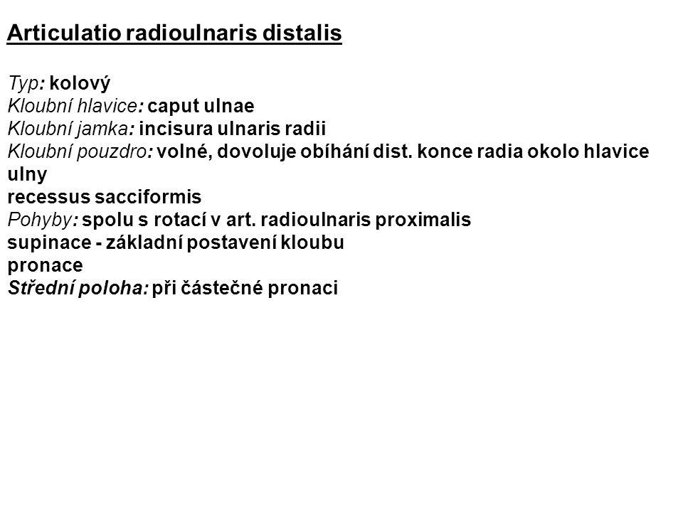 Articulatio radioulnaris distalis