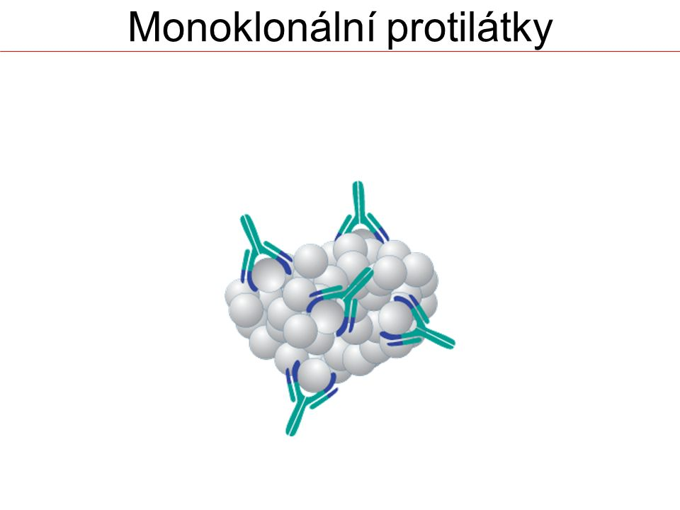 Monoklonální protilátky