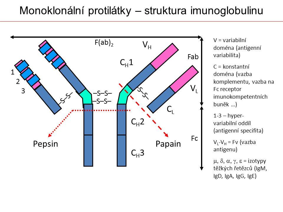 Monoklonální protilátky – struktura imunoglobulinu