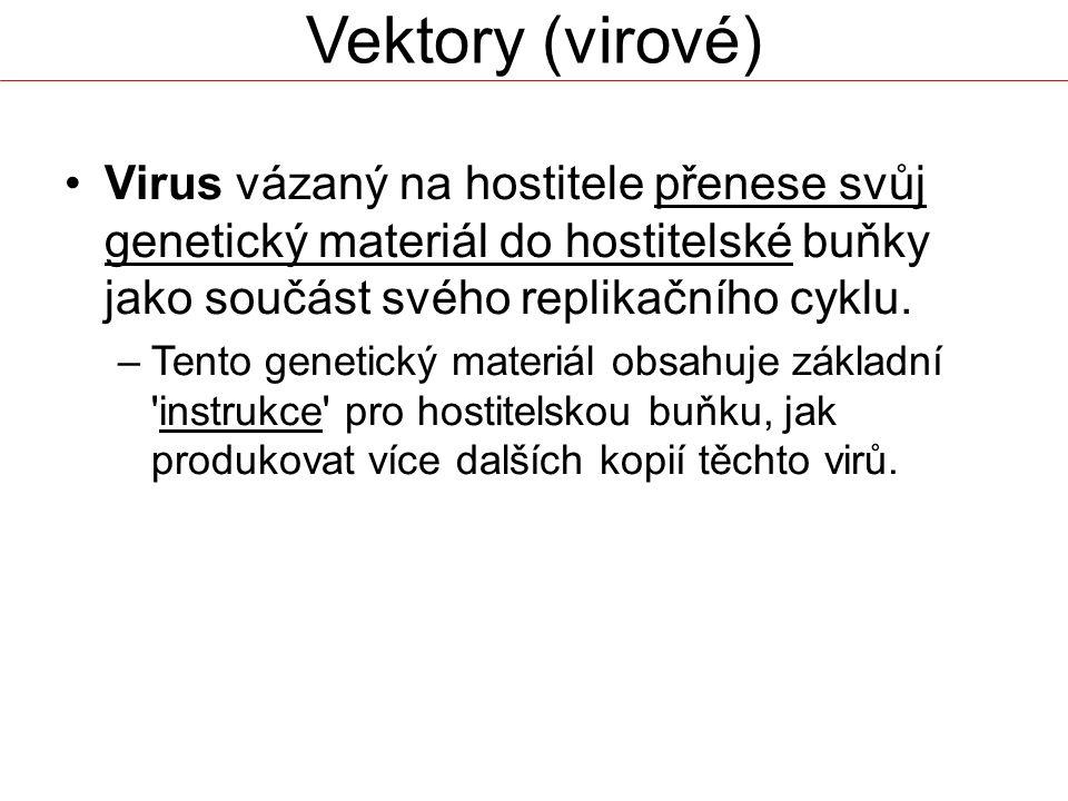 Vektory (virové) Virus vázaný na hostitele přenese svůj genetický materiál do hostitelské buňky jako součást svého replikačního cyklu.