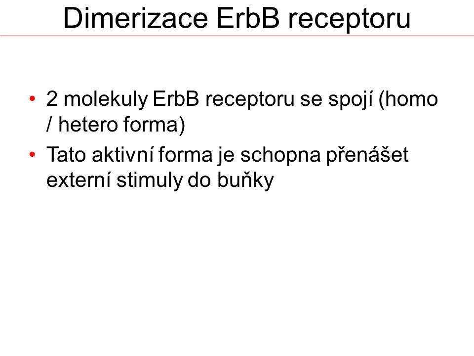Dimerizace ErbB receptoru