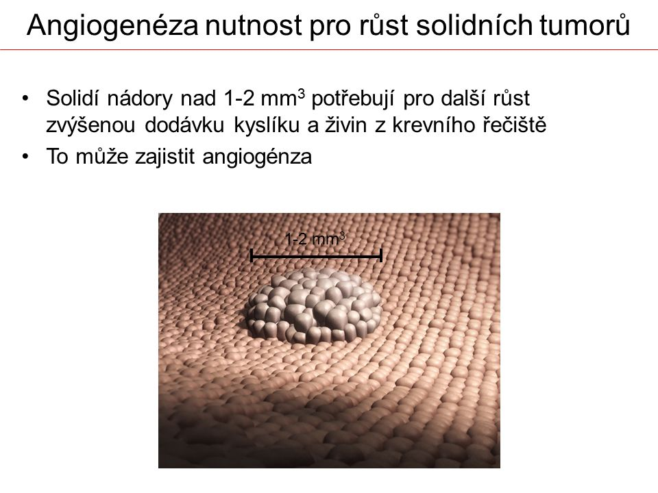 Angiogenéza nutnost pro růst solidních tumorů