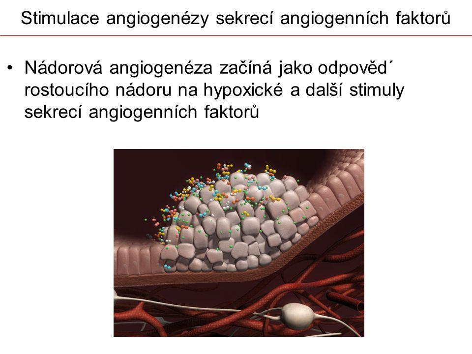 Stimulace angiogenézy sekrecí angiogenních faktorů