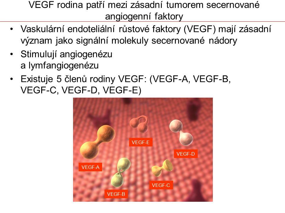 VEGF rodina patří mezi zásadní tumorem secernované angiogenní faktory
