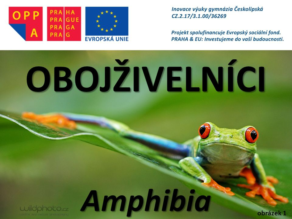 OBOJŽIVELNÍCI Amphibia obrázek 1
