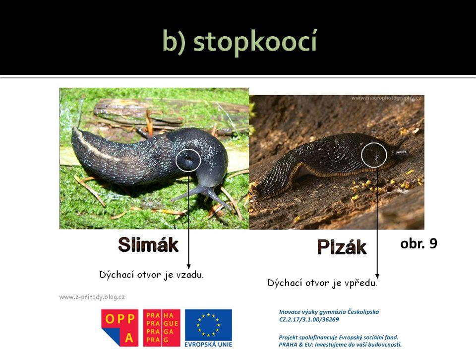b) stopkoocí http://z-prirody.blog.cz/1108/plzak-nebo-slimak obr. 9
