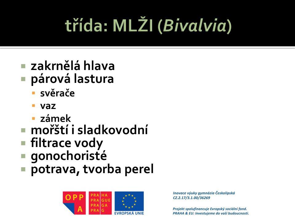 třída: MLŽI (Bivalvia)