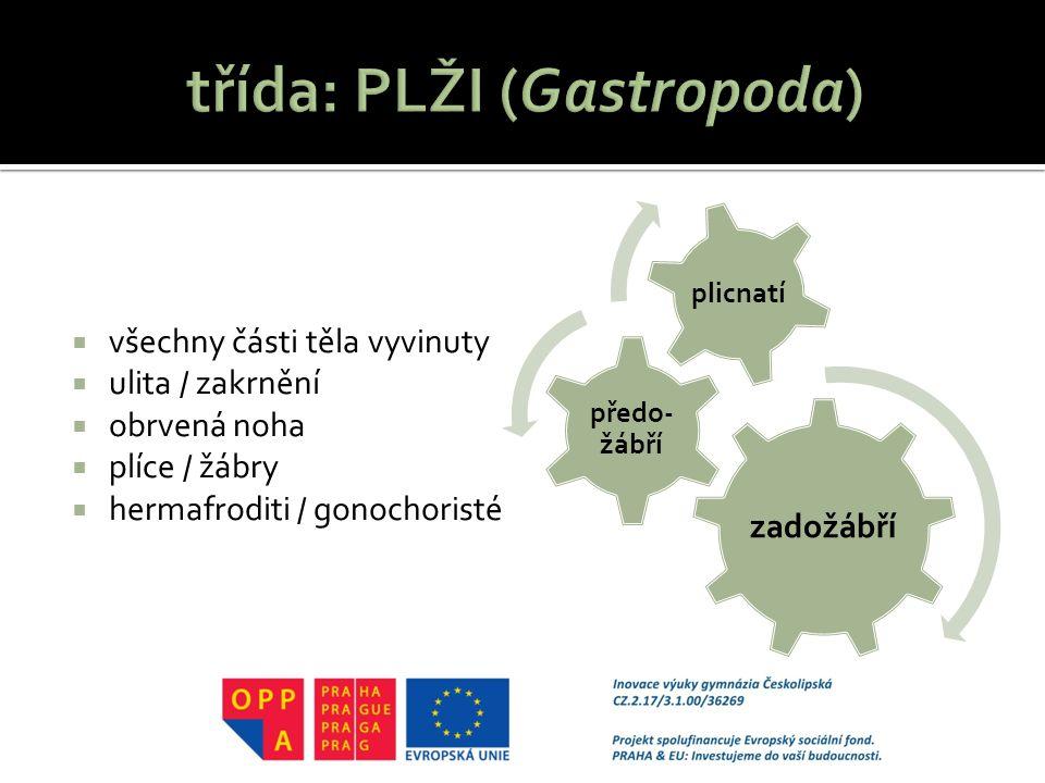 třída: PLŽI (Gastropoda)