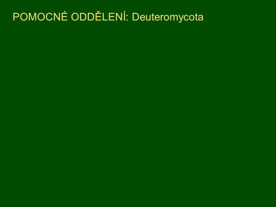 POMOCNÉ ODDĚLENÍ: Deuteromycota