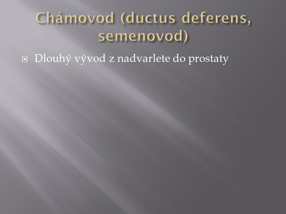 Chámovod (ductus deferens, semenovod)