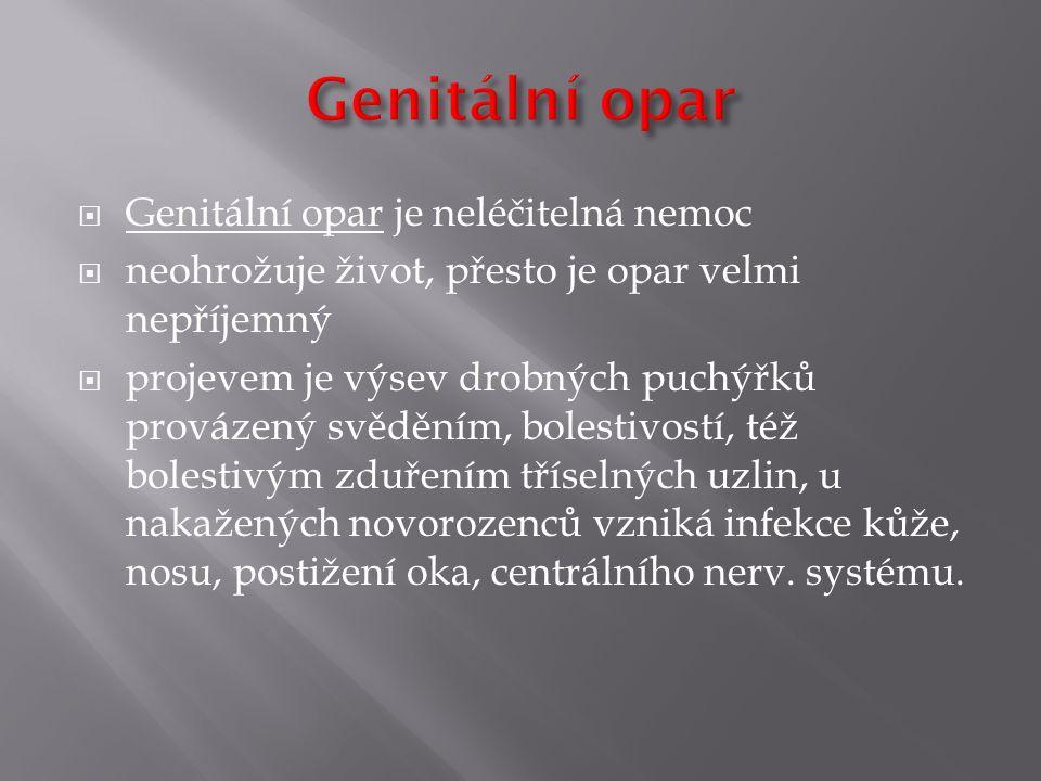 Genitální opar Genitální opar je neléčitelná nemoc
