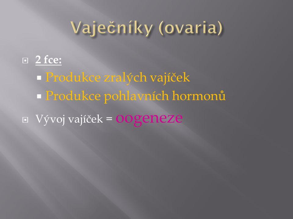 Vaječníky (ovaria) Produkce zralých vajíček
