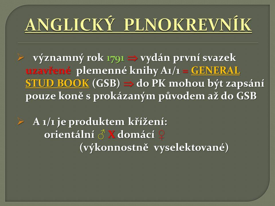 ANGLICKÝ PLNOKREVNÍK