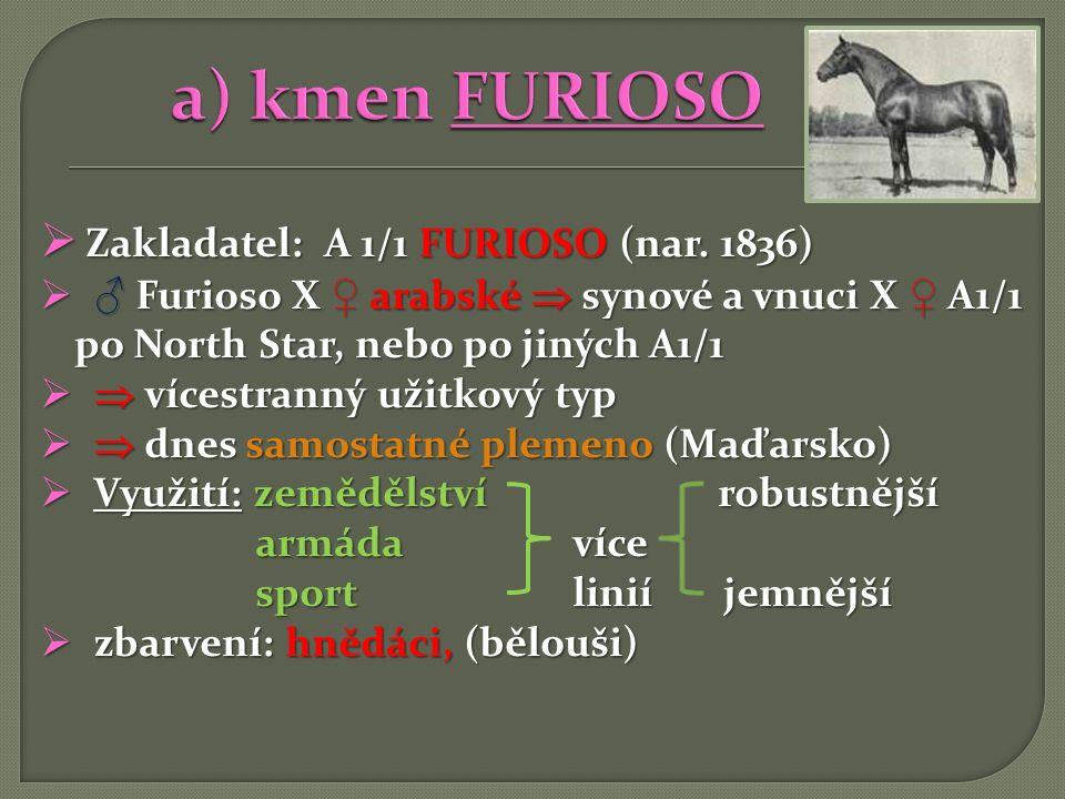 a) kmen FURIOSO Zakladatel: A 1/1 FURIOSO (nar. 1836)