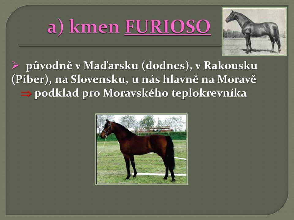 a) kmen FURIOSO původně v Maďarsku (dodnes), v Rakousku