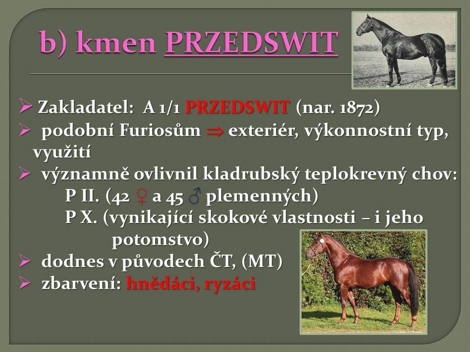 b) kmen PRZEDSWIT Zakladatel: A 1/1 PRZEDSWIT (nar. 1872)