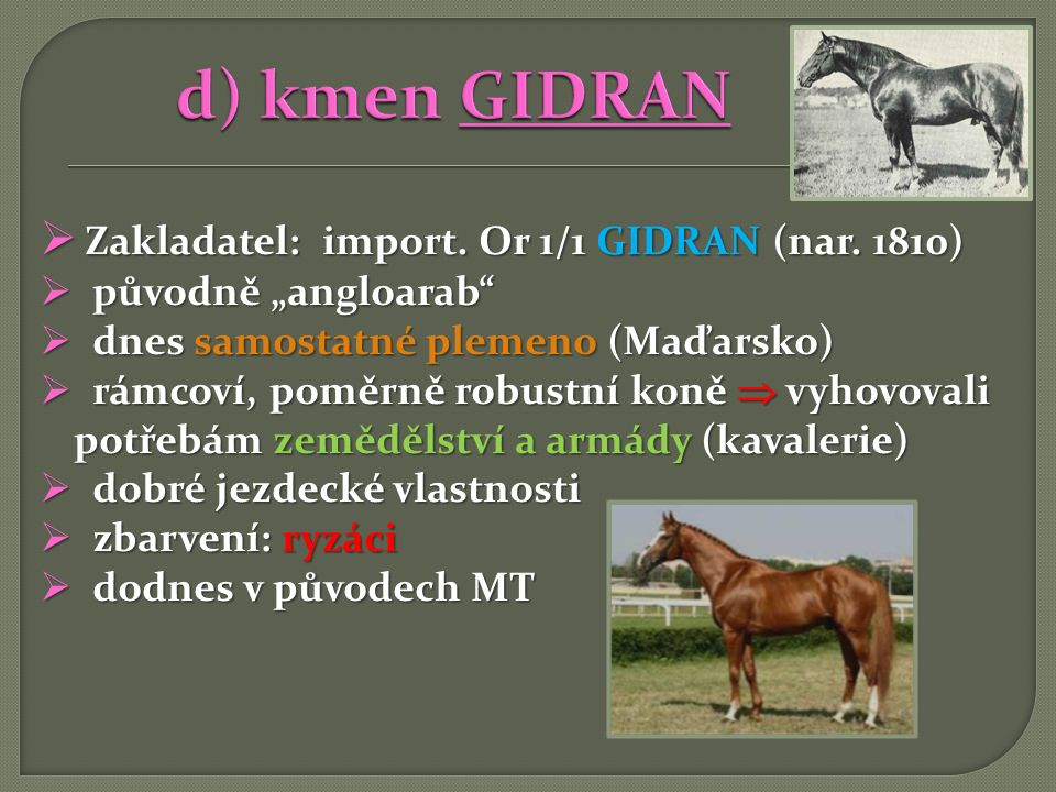 d) kmen GIDRAN Zakladatel: import. Or 1/1 GIDRAN (nar. 1810)