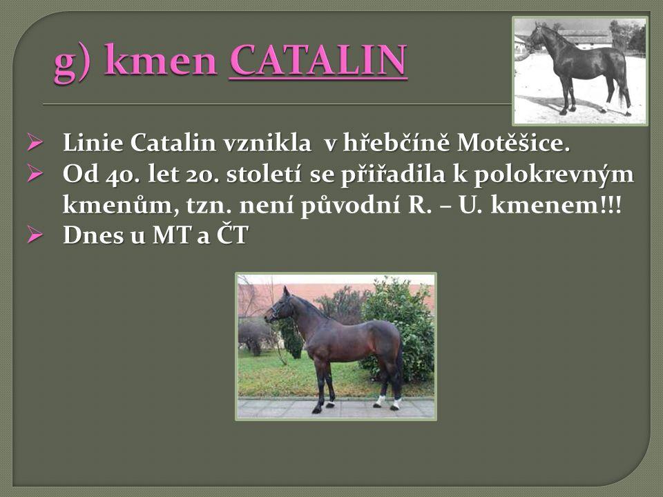g) kmen CATALIN Linie Catalin vznikla v hřebčíně Motěšice.