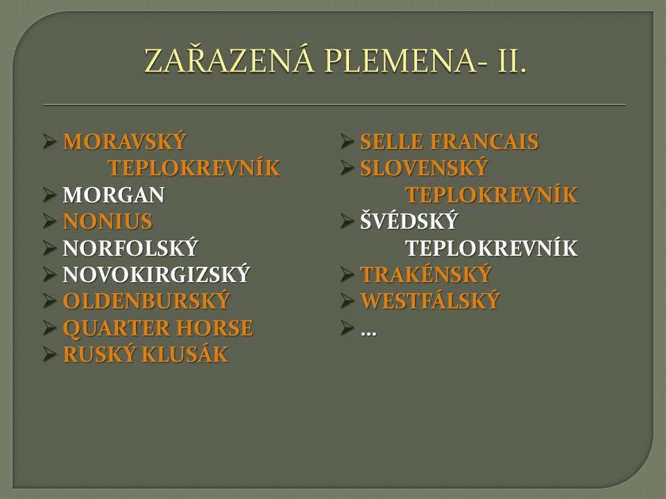 ZAŘAZENÁ PLEMENA- II. MORAVSKÝ TEPLOKREVNÍK SELLE FRANCAIS