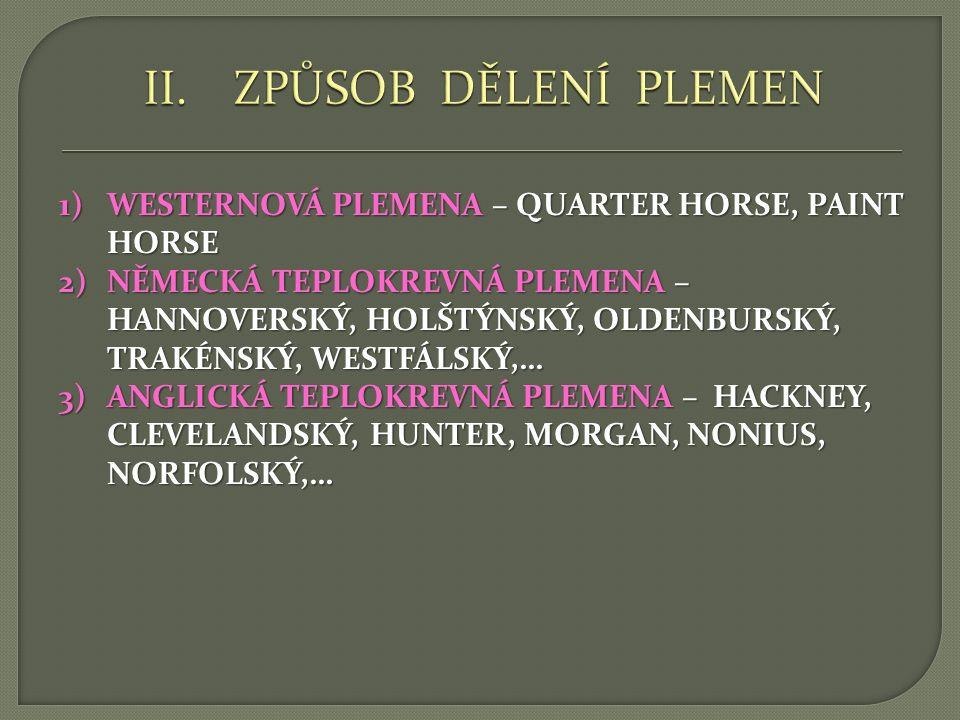 ZPŮSOB DĚLENÍ PLEMEN WESTERNOVÁ PLEMENA – QUARTER HORSE, PAINT HORSE