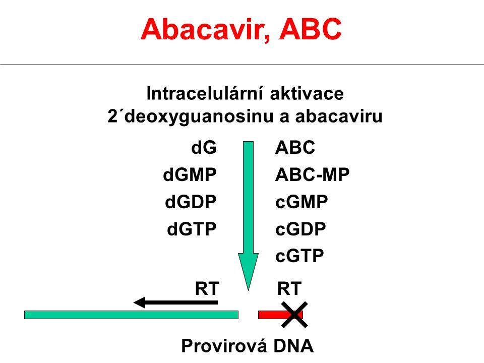 Intracelulární aktivace 2´deoxyguanosinu a abacaviru