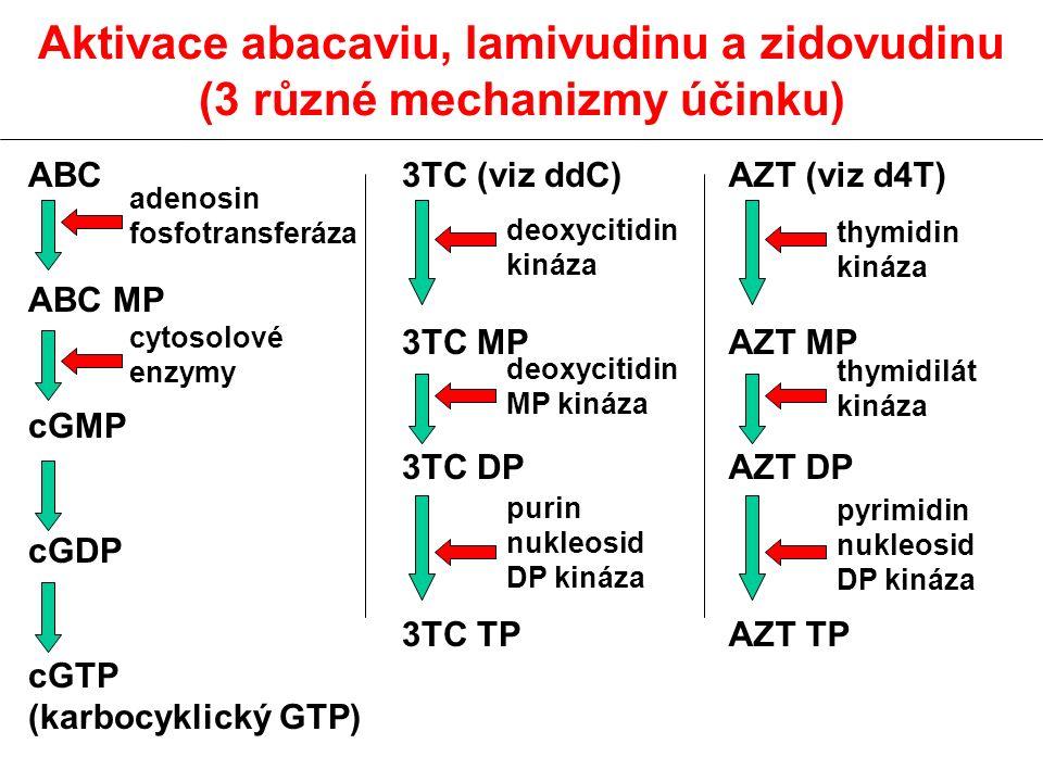 Aktivace abacaviu, lamivudinu a zidovudinu (3 různé mechanizmy účinku)