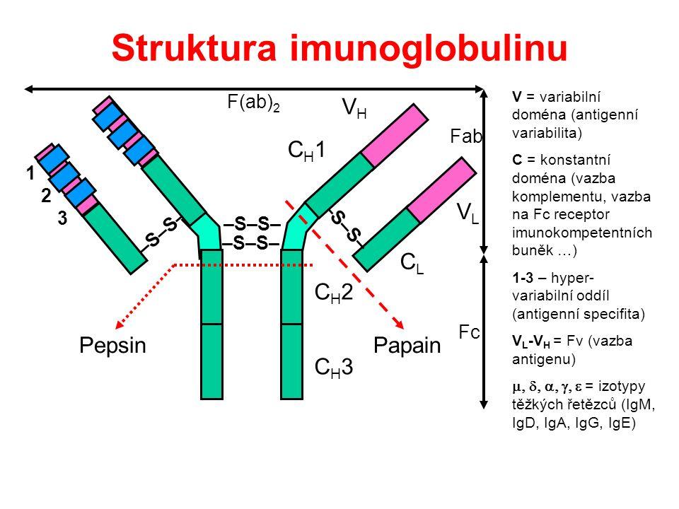 Struktura imunoglobulinu