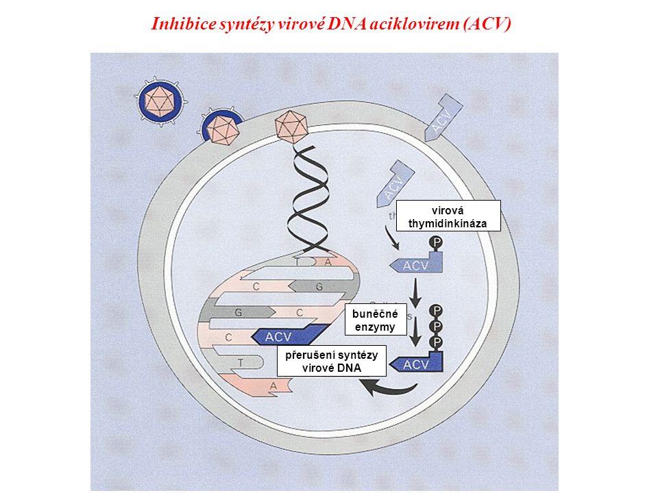 Inhibice syntézy virové DNA aciklovirem (ACV)