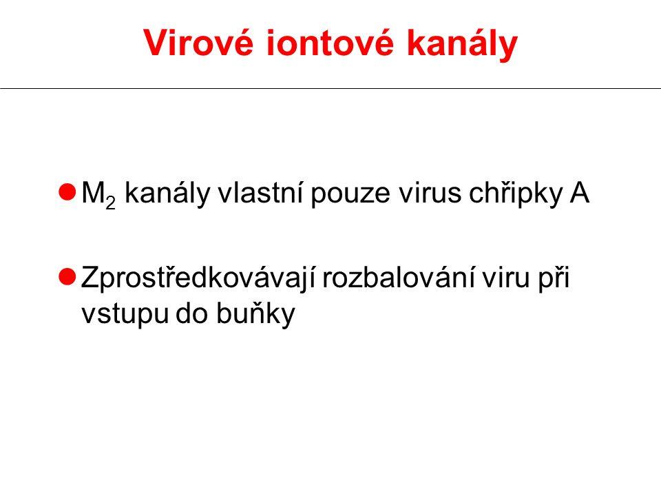 Virové iontové kanály M2 kanály vlastní pouze virus chřipky A
