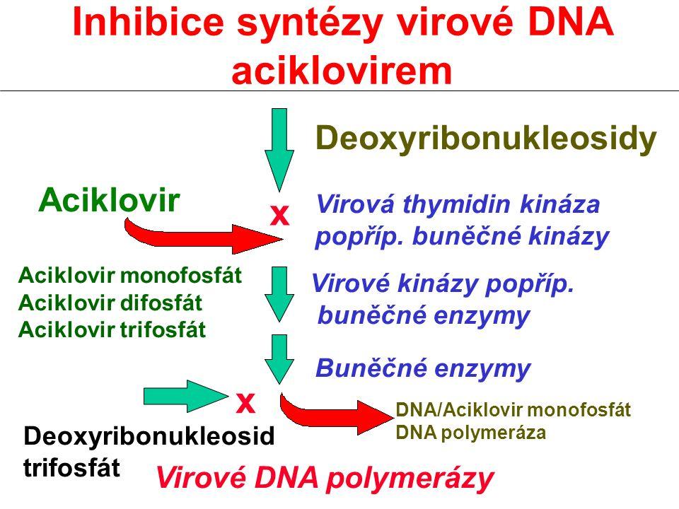 Inhibice syntézy virové DNA aciklovirem