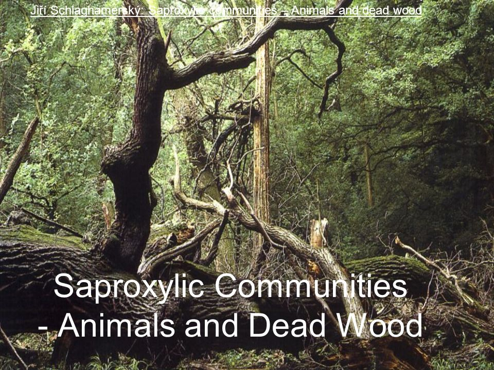 Saproxylic Communities - Animals and Dead Wood