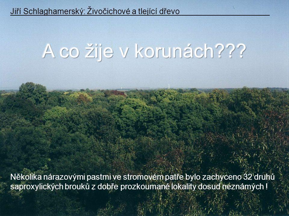A co žije v korunách Jiří Schlaghamerský: Živočichové a tlející dřevo. Několika nárazovými pastmi ve stromovém patře bylo zachyceno 32 druhů.