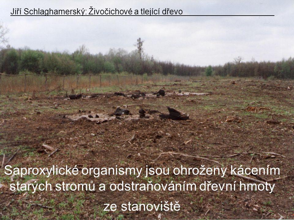 Jiří Schlaghamerský: Živočichové a tlející dřevo
