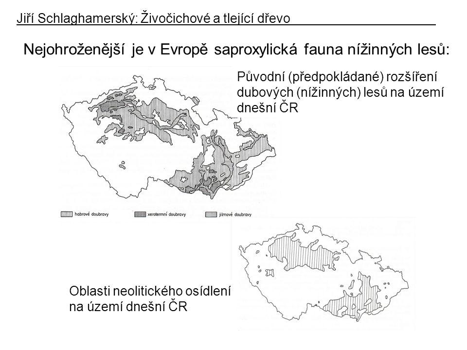 Nejohroženější je v Evropě saproxylická fauna nížinných lesů: