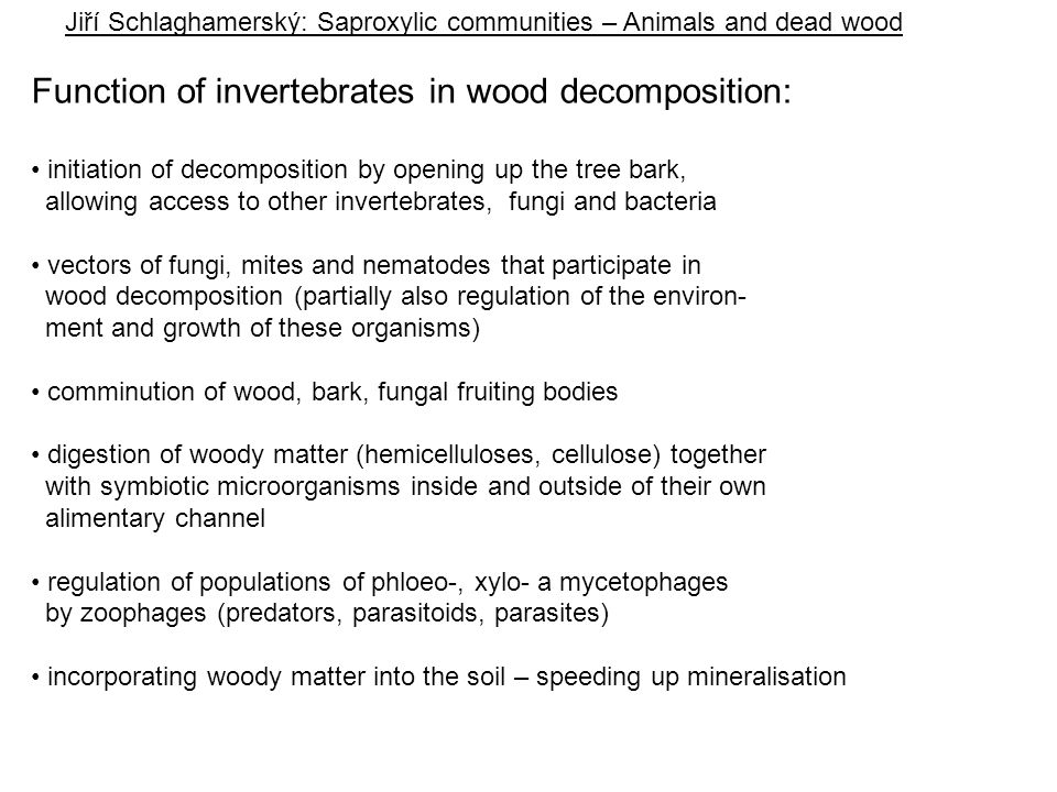 Function of invertebrates in wood decomposition: