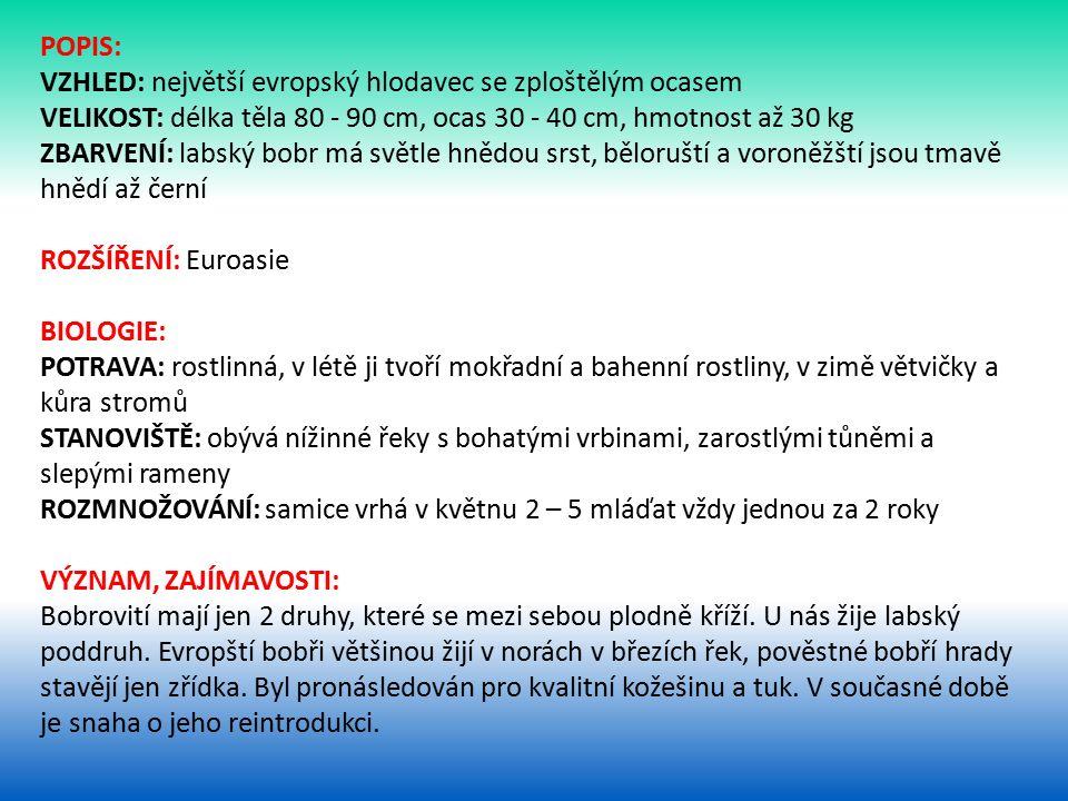 POPIS: VZHLED: největší evropský hlodavec se zploštělým ocasem. VELIKOST: délka těla 80 - 90 cm, ocas 30 - 40 cm, hmotnost až 30 kg.