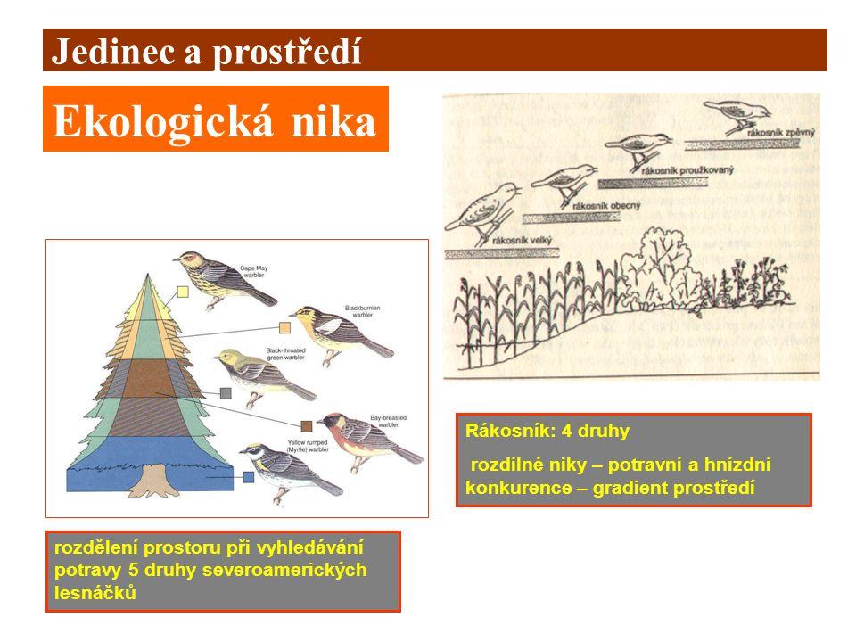 Ekologická nika Jedinec a prostředí Rákosník: 4 druhy