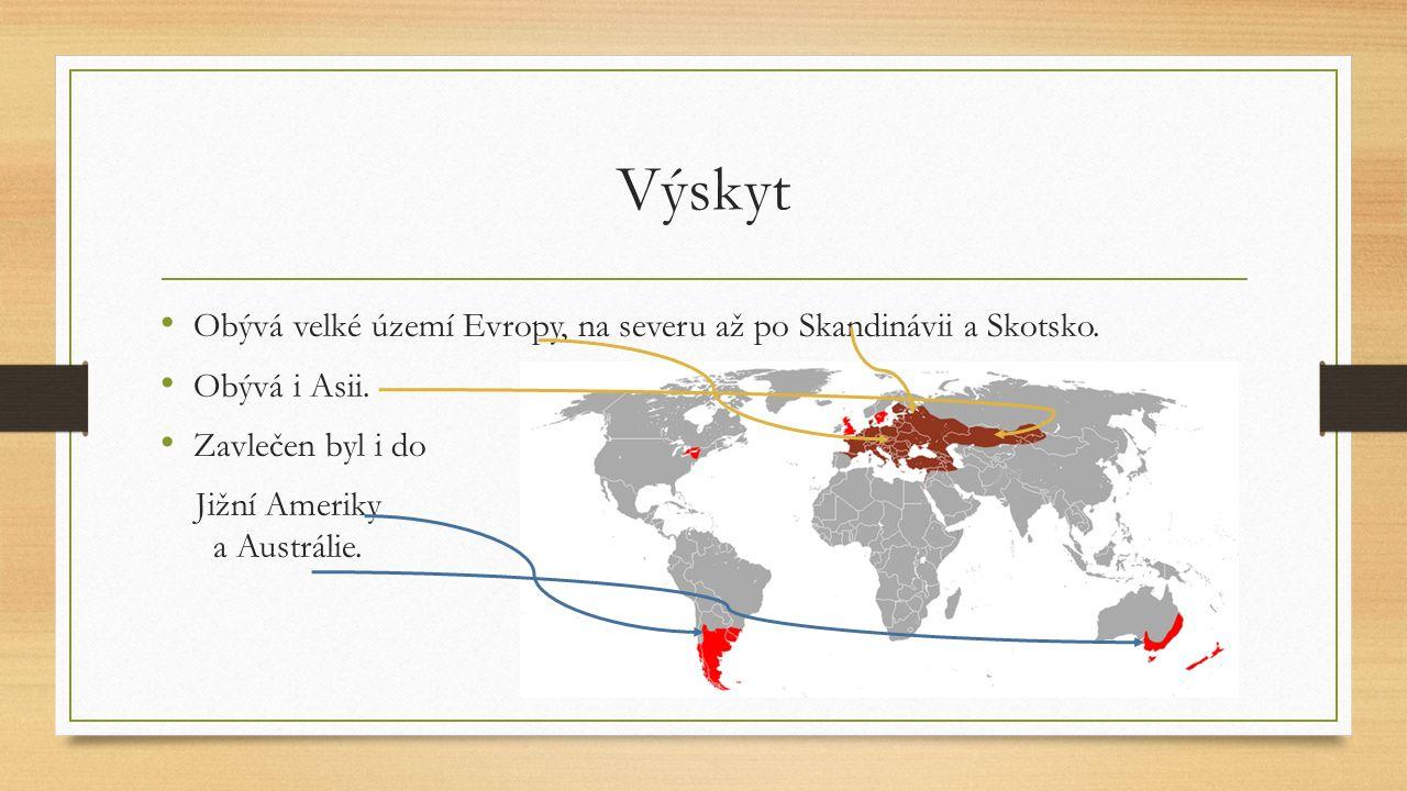 Výskyt Obývá velké území Evropy, na severu až po Skandinávii a Skotsko. Obývá i Asii. Zavlečen byl i do.