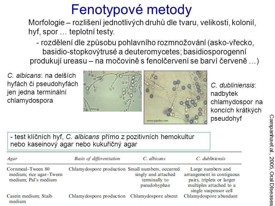 Fenotypové metody Morfologie – rozlišení jednotlivých druhů dle tvaru, velikosti, kolonií, hyf, spor … teplotní testy.