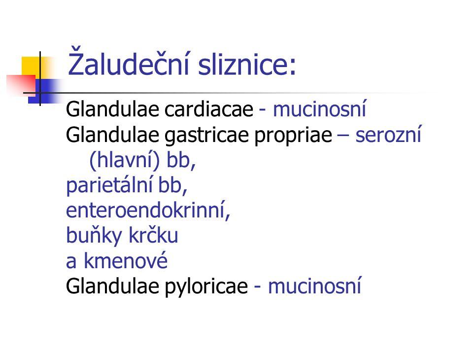 Žaludeční sliznice: