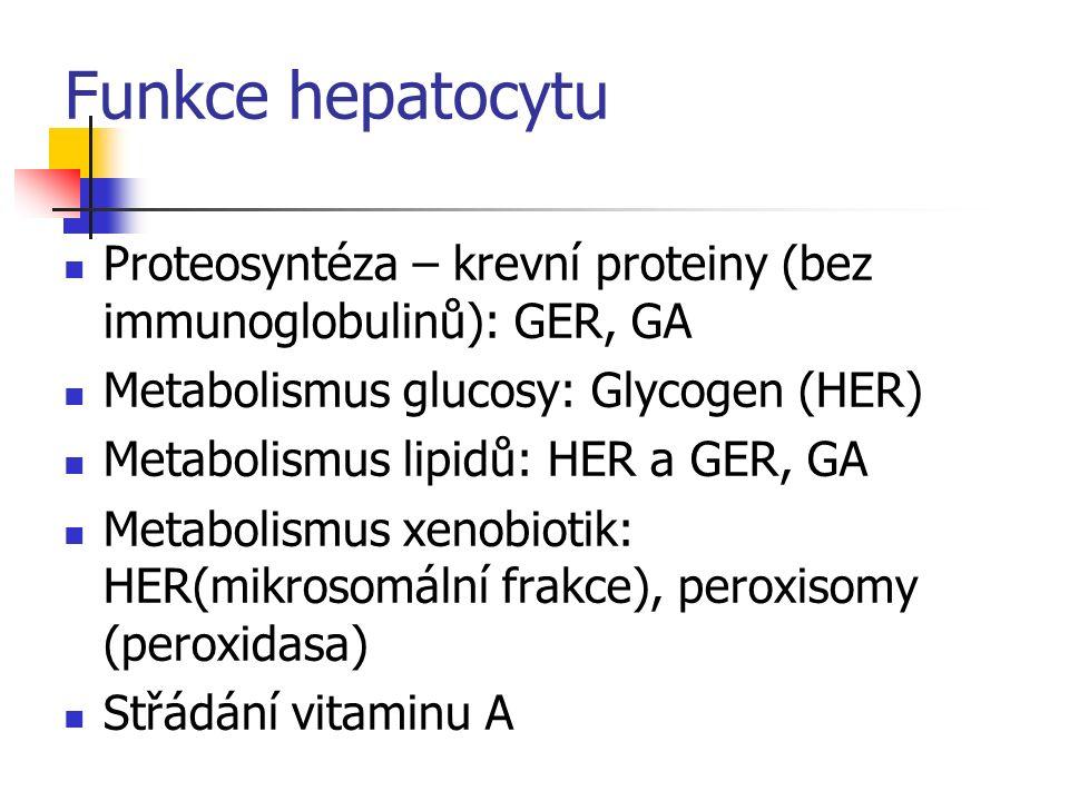 Funkce hepatocytu Proteosyntéza – krevní proteiny (bez immunoglobulinů): GER, GA. Metabolismus glucosy: Glycogen (HER)